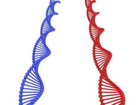 3d render of DNA on white background Stock Photo - 4492077