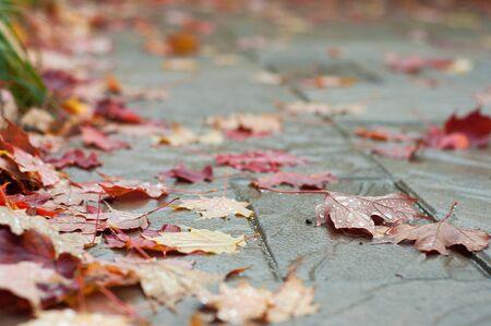 flagstone: Wet Autumn Fall Leaves on patio stone