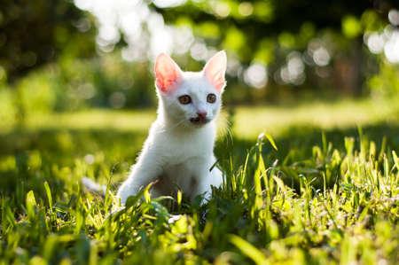 Cat hunter Stock Photo