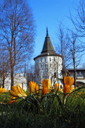 Flowers have blossomed near an architectural monument