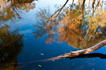 Reflection of colorful trees in the pure river