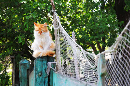 Cat sits on the fence near a fishing net Stock Photo