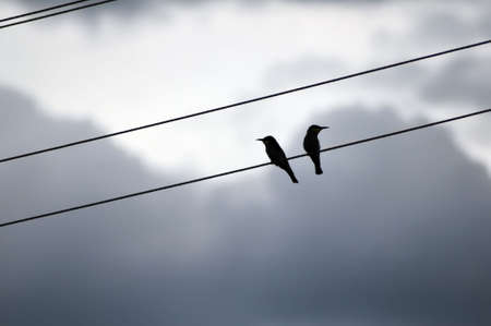 misunderstanding: Two birds resent each other are sitting on a electrical wire  Stock Photo