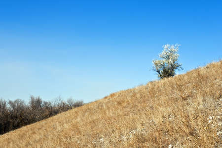 Lone tree growing on the hill