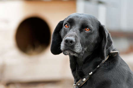 Black dog with sad eyes is sitting next to a kennel