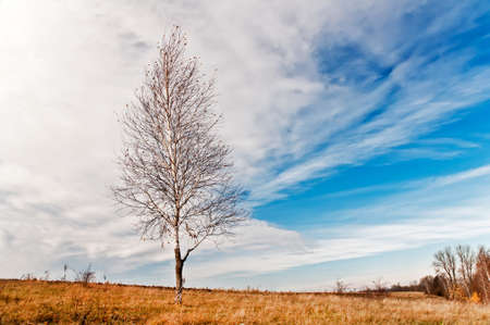 A lonely young birch tree is growing on a hill