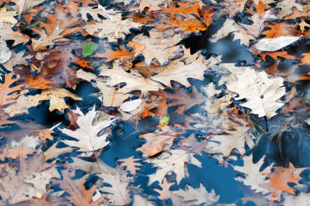 Colourful autumn leaves on water