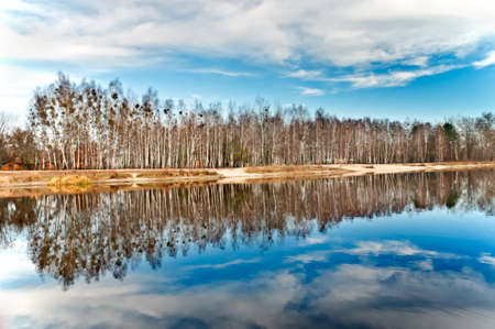 Row of birches near the lake are reflected in the water    Stock Photo