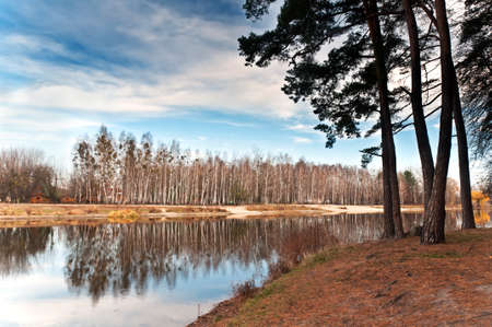 Row of birches near the lake are reflected in the water. In the foreground of pine