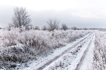 Snowy road is situated among the gardens  Stock Photo