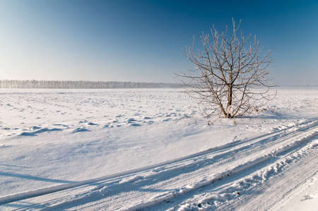Nut tree stand in a snow-covered field Stock Photo