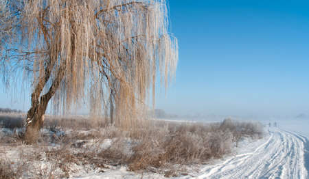 Winter landscape with fog, rural road and hoarfrost on the willow tree 
