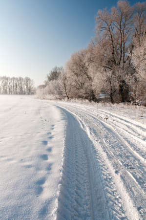 Broad trodden road goes in the winter forest