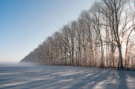 Sun shines through the row of tall trees