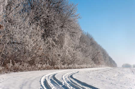 The long row of tall trees covered with hoarfrost and the road passing by near Stock Photo