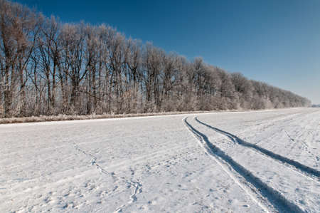 The row of trees on snow-covered field is coated with hoarfrost