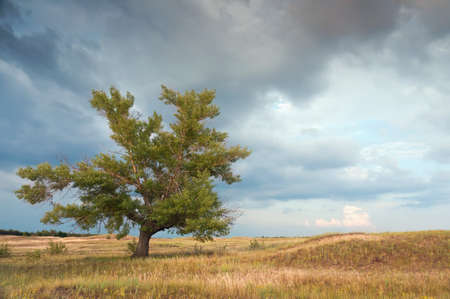 The big old tree alone grows in steppe Stock Photo