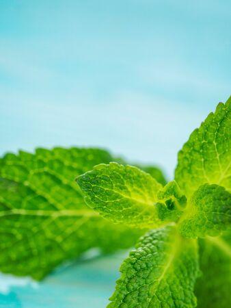 cerulean: Fresh mint leaf close up on blue background. Vertical, selective focus, shallow DOF, copy space