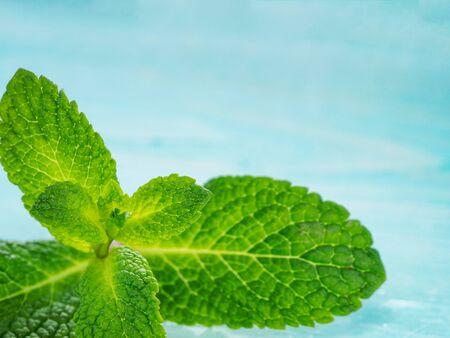 cerulean: Fresh mint leaf close up on blue background. Selective focus, shallow DOF, copy space