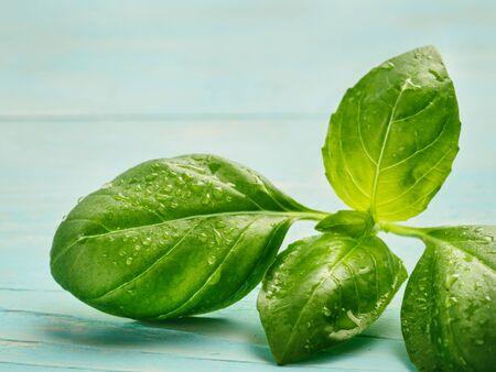 cerulean: Fresh basil leaf close up on blue background