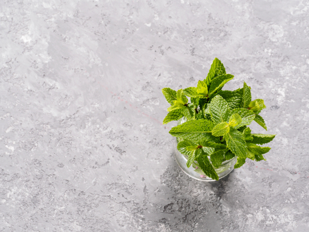 sheaf of fresh mint leaf on gray concrete background. Top view or flat lay. Copy space