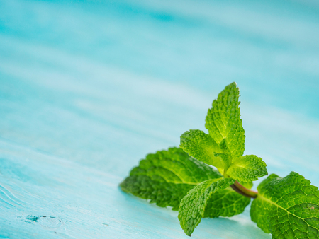 Fresh mint leaf close up on blue background. Selective focus, shallow DOF, copy space