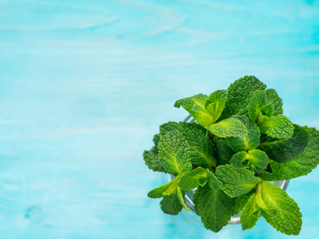 sheaf of fresh mint leaf on blue background. Top view or flat lay. Copy space