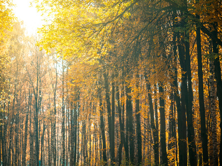 Herbstpark. Schöne romantische Gasse im Park mit bunten Bäumen und Sonnenlicht. Herbst natürlicher Hintergrund. Fallendes Laub, Herbstlandschaft. Platz für Text kopieren Standard-Bild