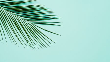 Tropical palm leaves on pastel blue background. Tropical palm leaves top view or flat lay. Copy space for text or design. Horizontal banner. Floral pattern background Banque d'images