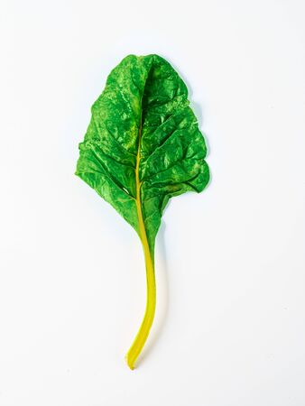One swiss chard leaf isolated on white background. Fresh swiss rainbow chard with yellow and green colors, top view or flat lay