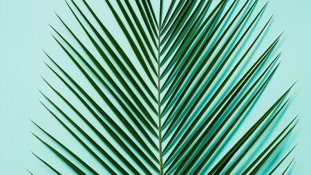 Feuilles de palmier sur fond bleu pastel, espace copie