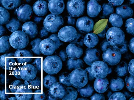 Beautiful blueberries background in color of the year 2020 Classic Blue. Blueberries with green leaf. Top view or flat lay. Copy space for text. Color of Year 2020 Classic Blue.