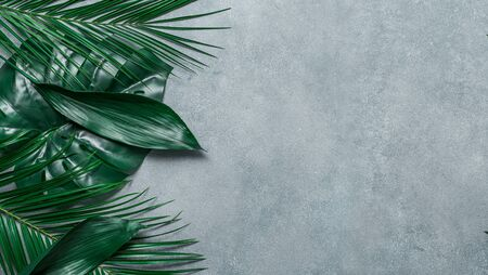 Palm leaves on gray stone background. Tropical leaves top view or flat lay. Copy space for text or design. Horizontal banner. Tropical palm leave, jungle leave floral pattern background Zdjęcie Seryjne