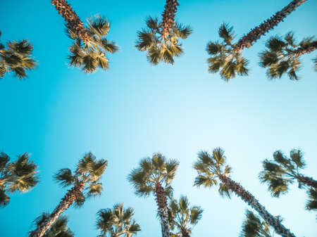 Beautiful pattern of palm trees with blue sky Banque d'images