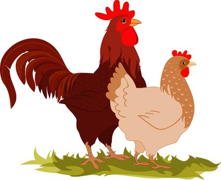 Cartoon illustrazione vettoriale di un gallo e una gallina.