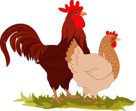 hens: Cartoon vectorial illustration of a hen and a rooster.