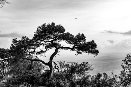 silhouette of a tree stands out on the gulf of Gibraltar on sunset Zdjęcie Seryjne