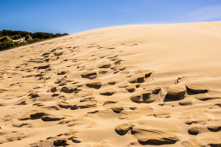 wonderful close up of some sand dunes in the spagola beach of Bolonia 写真素材