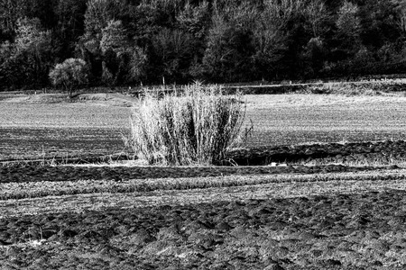 Shrub in the middle of a plowed field in the fields near Vicenza, taken in a vintage black and white Stock Photo