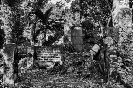 cinnamon distillery abandoned and covered by vegetation