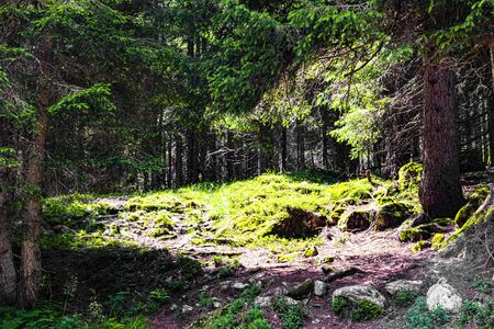 splendid view of the woods near val Malene on the Tesino plateau in the Lagorai Dolomites in Trento Archivio Fotografico - 131087625