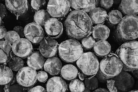 large stacks of woods due to the forest dying in the lagorai montains stored for th ewood industries picked up in Pieve Tesino Tren to italia