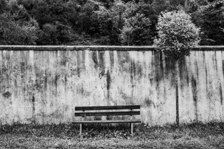 image of an empty bench with an old white wall and a tree with green leaves