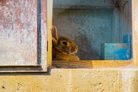 beautiful image of a rabbit that protects itself in the shade of its house from the summer sun in the hills the Valle dei Mulini above San Giorgio di Pelrena in Vicenza.