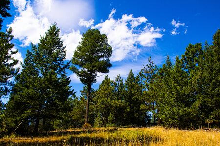 trees stand out against the blue sky with white clouds on a summer day in Chautauqua Park in Boulder Colorado Stockfoto - 134036807