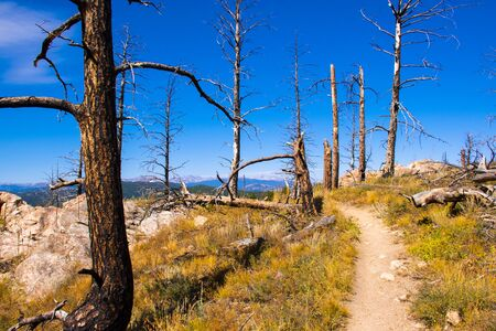 path through the trees devastated by a forest fire in Chautauqua Park in Boulder Colorado with the yellowed grass from the heat and the drought of late summer. Stockfoto - 134036817