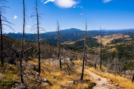 path through the trees devastated by a forest fire in Chautauqua Park in Boulder Colorado with the yellowed grass from the heat and the drought of late summer. Stockfoto - 134036820