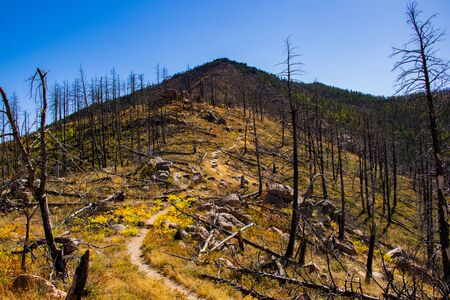 path through the trees devastated by a forest fire in Chautauqua Park in Boulder Colorado with the yellowed grass from the heat and the drought of late summer.
