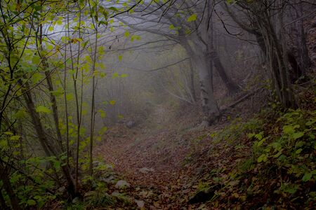 path wrapped in autumn fog among trees and fallen leaves on the path to Monte Pau in Cogollo del Cengio in the province of Vicenza, Veneto, Italy.