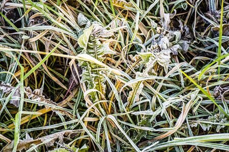 blades of frozen field grass on a cold December morning Stockfoto
